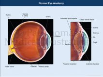 Eye anatomy sagittal