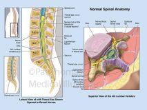 Lumbar spine